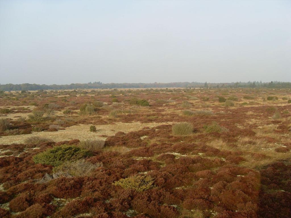 сухая трава в поле